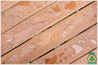 madera-resistente-al-agua-maderas-de-cuale-puerto-vallarta