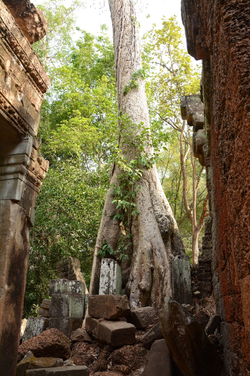 angkor wat cambodia top tips travel holiday vacation tree