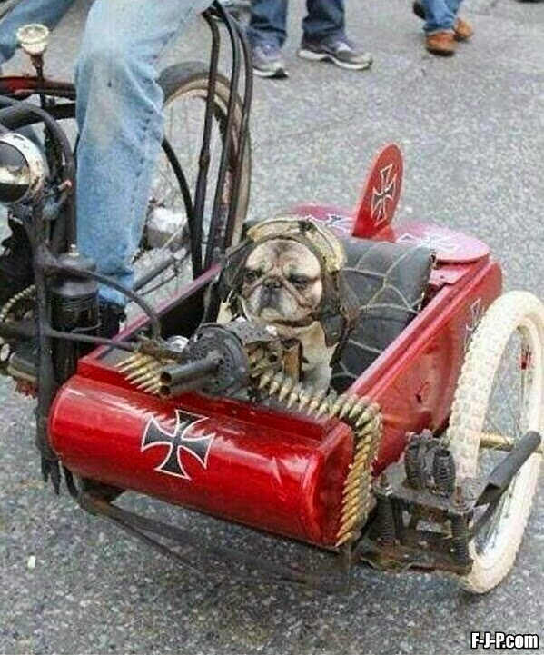 Funny Military Side-car Dog Photo
