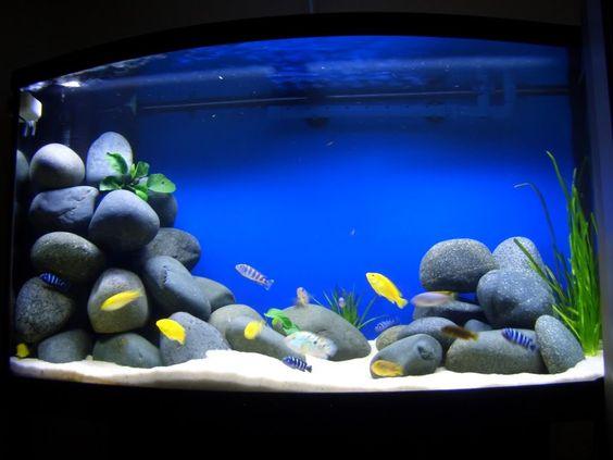 Tạp hóa thủy sinh - sản phẩm đá cuội trong bể thủy sinh