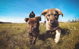 """""""Creche para cães proporciona melhora na saúde e no comportamento"""""""