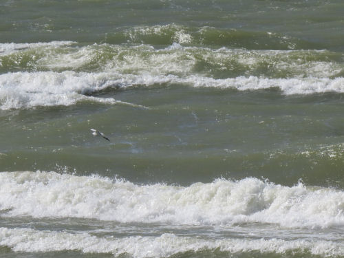 Lake Michigan with green waves and a seagull