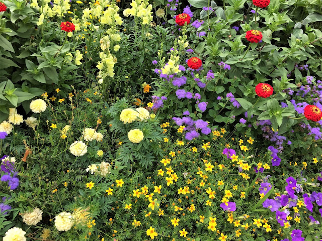 Sommerflor in der Gartenschau Lahr