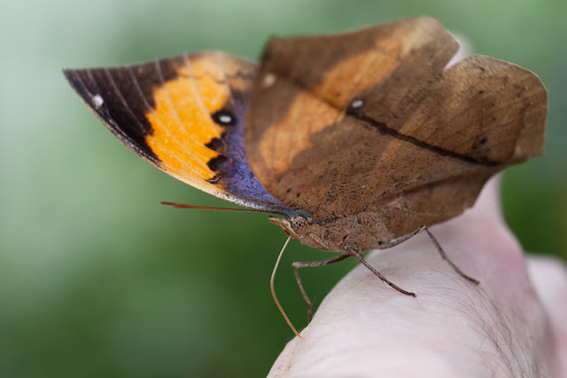Phils Photographic Adventures: Chester Zoo Butterfly House