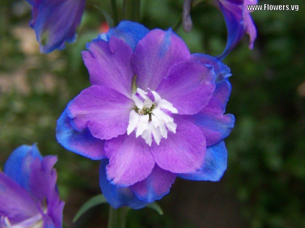 Wedding Flowers: Purple Delphinium