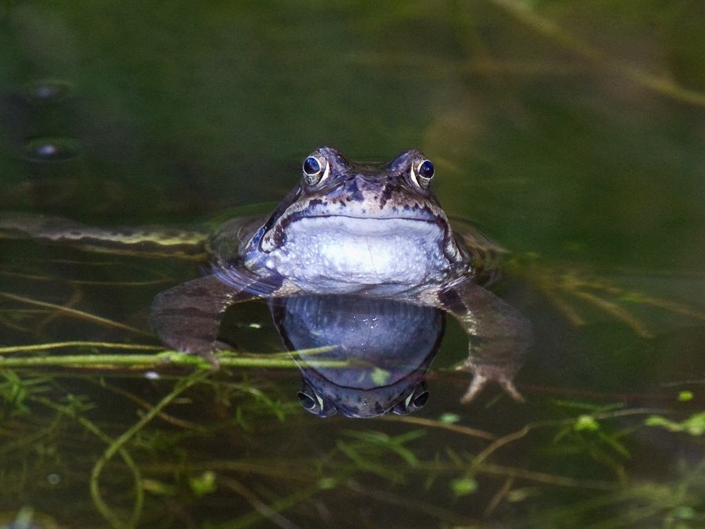 Bird and Wildlife Photos from Somerset and Devon : Frog ...