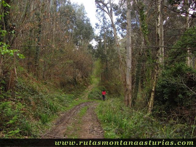 Pista entre árboles en Corvera