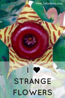 strange flowers La Todera Pinterest
