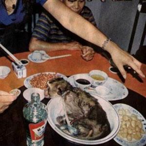 otak monyet hidup 9 Makanan Enak yang Ternyata Beracun