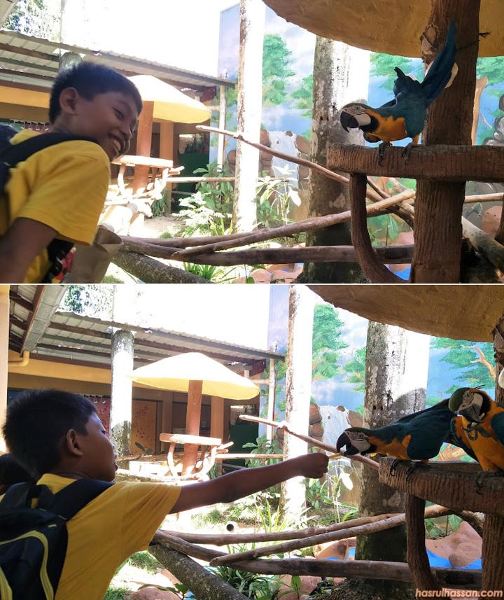 Beri makan burung di Bird's Paradise Pulau Langkawi