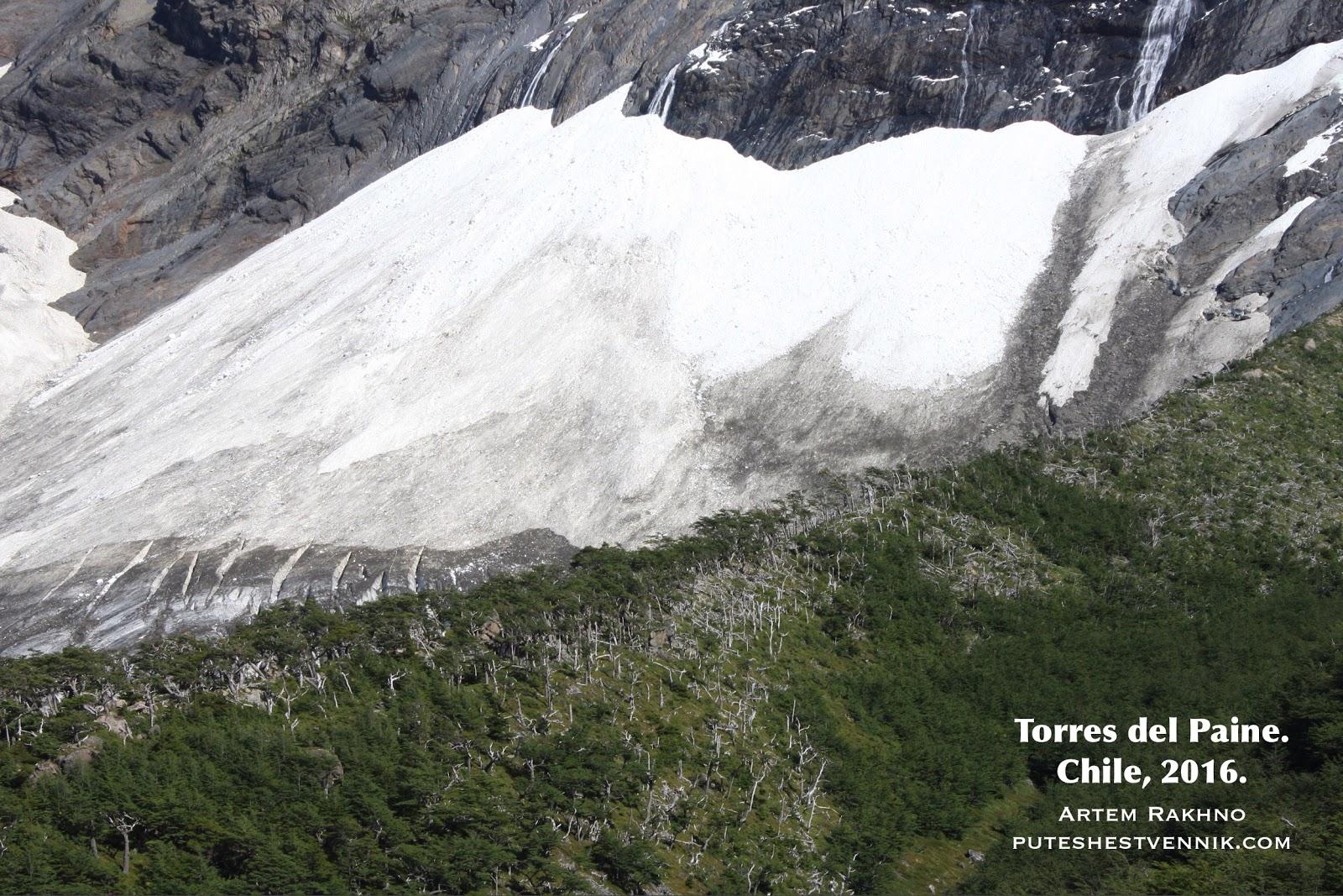 Лес и ледник в Торрес-дель-Пайне