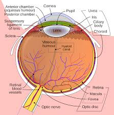 NearSightedness  Causes