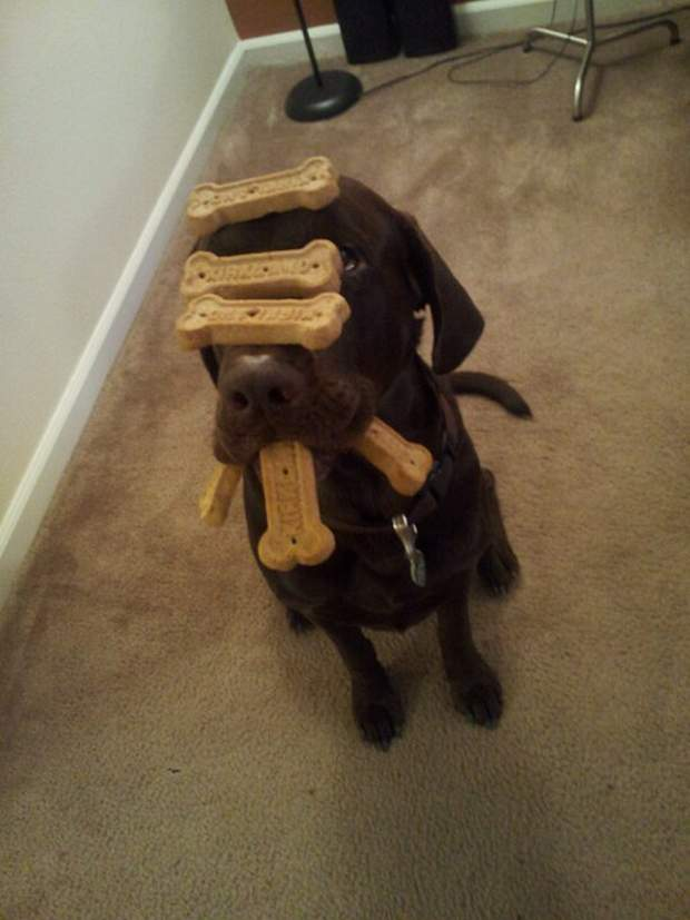 Cute dogs - part 116, funny dog picture, dog photos, best funny dog photos