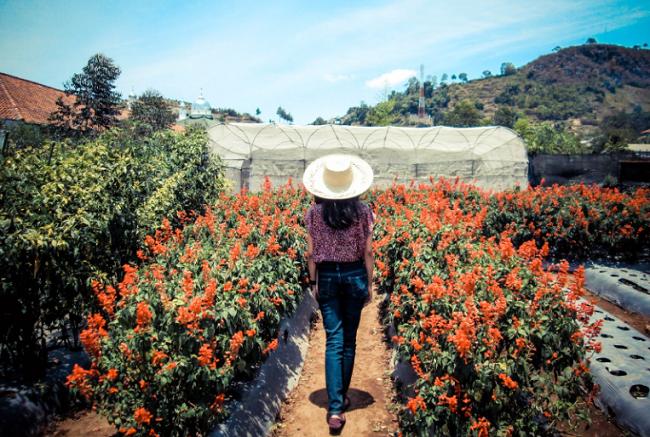 Menikmati Aneka Macam Bunga di Kebun Begonia Lembang