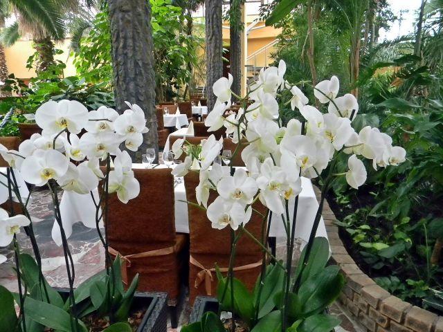 kwiaty, egzotyczne, roślinność, palmiarnia