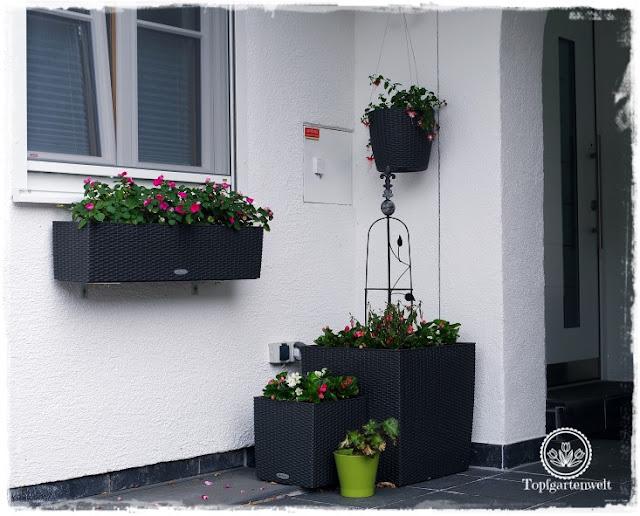 Gartenblog Topfgartenwelt Buchvorstellung Buchrezension: Der mobile Garten - Konzepte für große Pflanzgefäße - kreativ, mobil, stylish - Gärtnern in Töpfen - den Eingangsbereich mit Töpfen gestalten