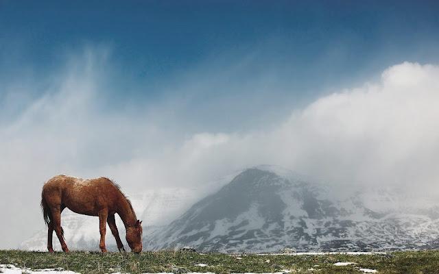 Landschap met bergen en een bruin paard