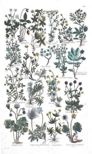 Public Engraving of Herbs from  The British Herbal, 1756