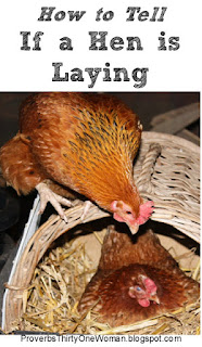 https://proverbsthirtyonewoman.blogspot.com/2018/06/how-can-i-tell-if-my-hen-is-laying.html
