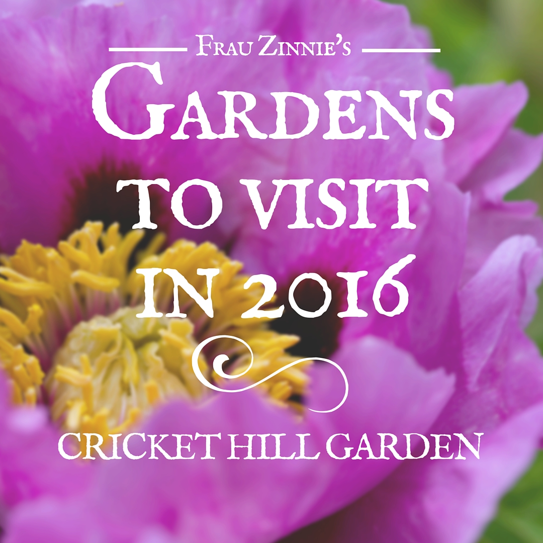 Peonies Promise To Dazzle At Cricket Hill Garden