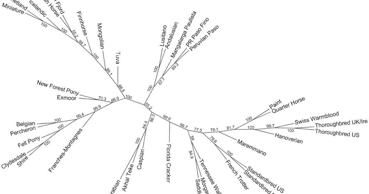Dienekes' Anthropology Blog: Genetic diversity of modern