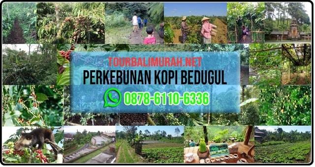 Perkebunan Kopi atau Agrowisata Bali