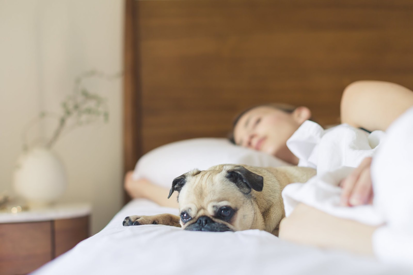 woman asleep on a bed next to her dog