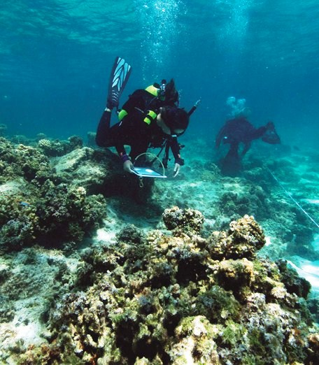 All Hawaii News: Coral Reefs Dying, Honolulu And Big
