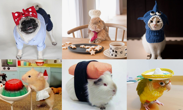 Various types of Pets in cute costumes