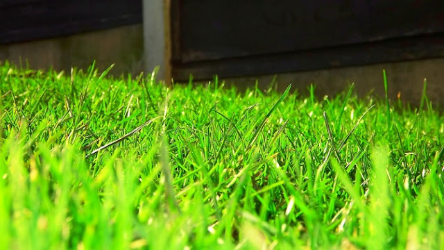 Langkah Mudah Menanam Rumput Sendiri di Taman