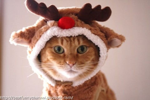 Cat Christmas deer.