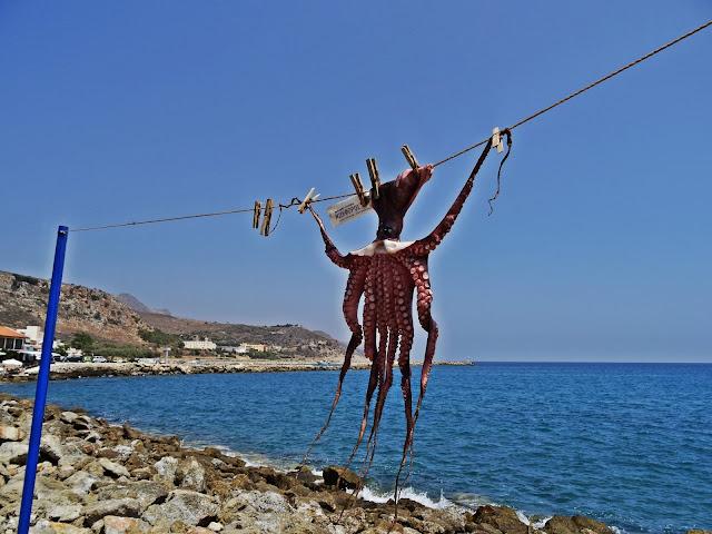 suszone ośmiornice w Grecji, gdzie można zobaczyć?