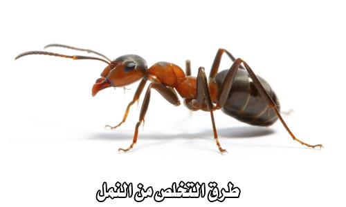 طرق التخلص من النمل فى المنزل
