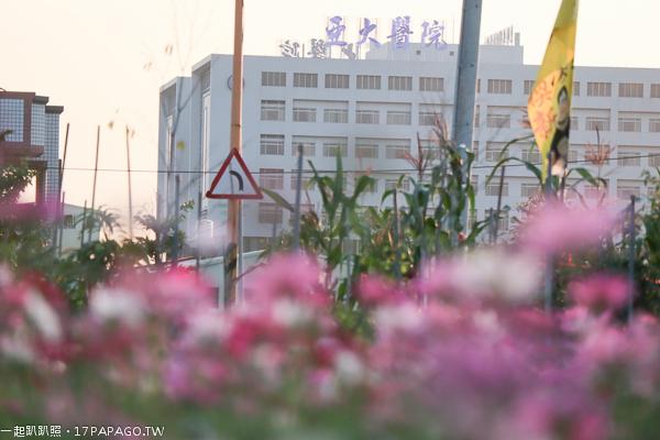 台中霧峰|2018亞大醫院福新路花海|數公頃花海免費拍|霧峰交流道旁