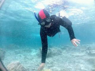 Snorkeling di Wisata Pulau Menjangan Bali Barat