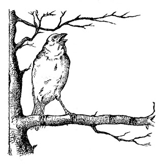 bird tree illustration digital image