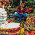 Autoridades de Tingo María promueven la Ruta del Cacao 2017
