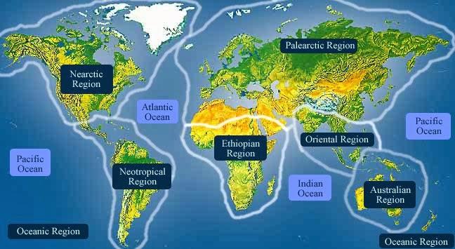 Biogeografia e os Domínios Morfoclimáticos Brasileiros
