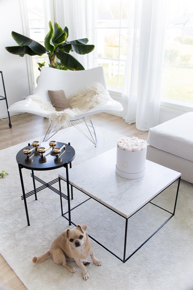 Villa H, chihuahua, koiran elämää, olohuone, klassinen sisustus