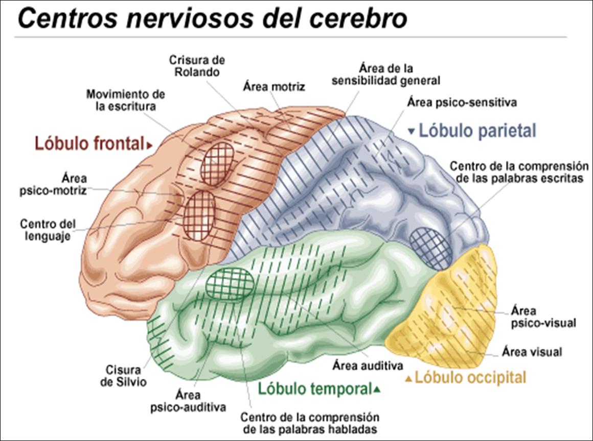 Theatre Of Solitude: Los Misterios Del Cerebro: El