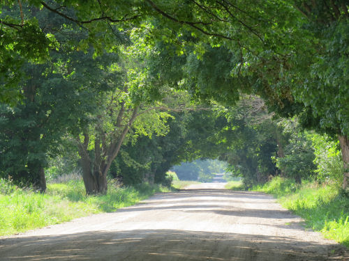 Conrad Road tunnel of trees