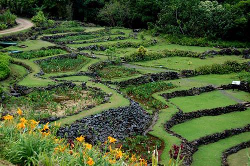 Gone Gardening: Limahuli Garden