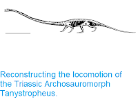 http://sciencythoughts.blogspot.com/2018/03/reconstructing-locomotion-of-triassic.html