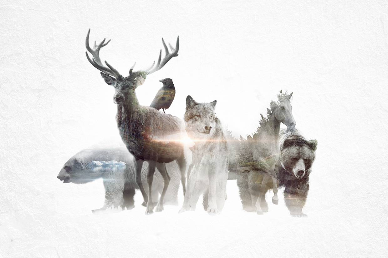 14-Group-Photo-Said-Dagdeviren-Double-Exposure-Animal-Cinemagraph-Animations-www-designstack-co
