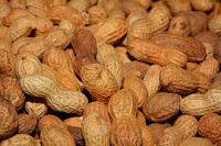 A importância das Gorduras par o Organismo
