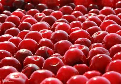 Loads of sour cherry
