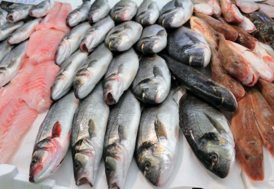 فرحة السوايسة بشراء الأسماك قبل رمضان