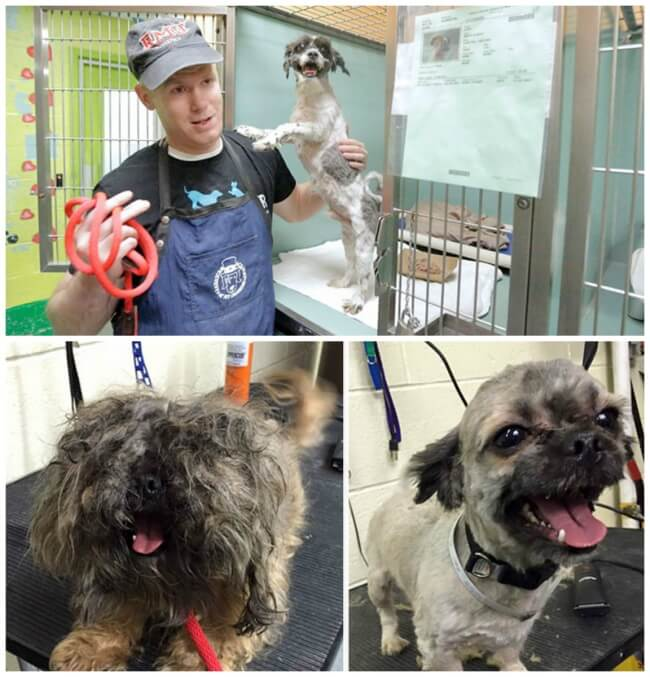 22 Stirring Pictures That Made Even The Toughest Of Us Cry - This man gives free haircuts to dogs at the shelter.