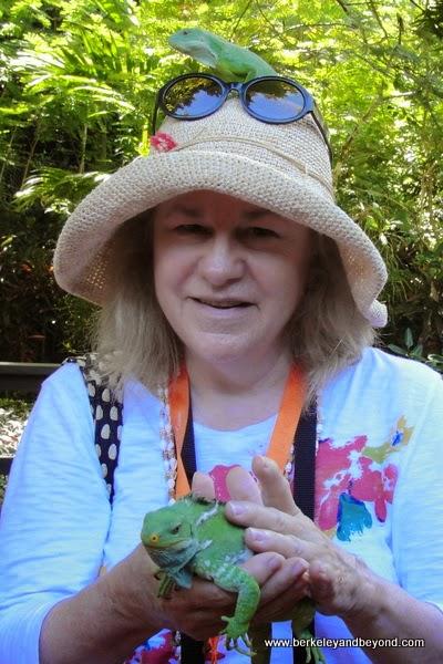travel writer Carole Terwilliger Meyers with iguanas at Kula Eco Park in Fiji
