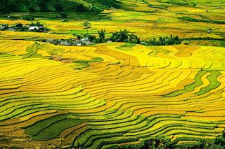 Terrazas de arroz, Vietnam, destino de bajo presupuesto